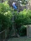 Dan_up_a_tree